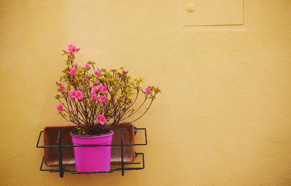 Yellow wall with pink flowers