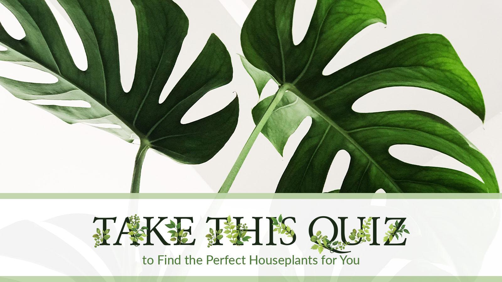 somo-req-houseplantsquiz-012720-featured-940×400-1