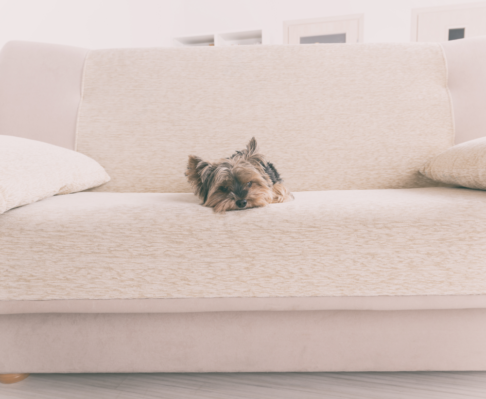 Image-dog-on-couch@2x